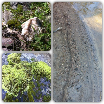 Nature things - quartz, moss and animal trails