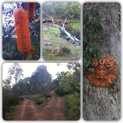 Bottle brush, fallen trees, pathways and nature sprite faces